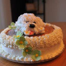 Dogs – All Breeds Birthday Cakes